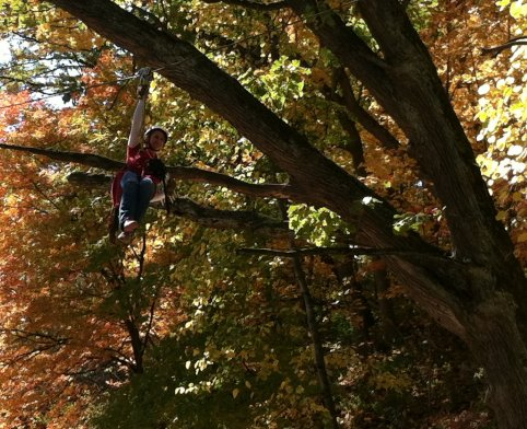 Ziplines, Canopy, Tour, Chicago